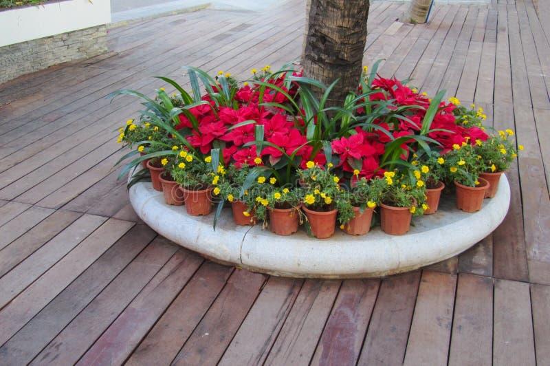 Centro de flores alrededor del tronco de una palmera fotos de archivo