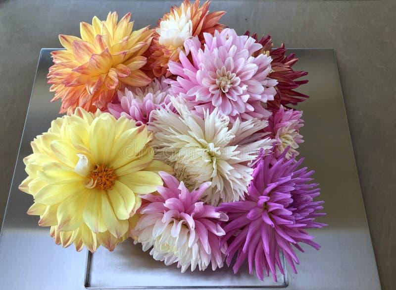 Centro de flores ascendente cercano de un surtido de dalias que se sientan en una placa de metal fotografía de archivo libre de regalías