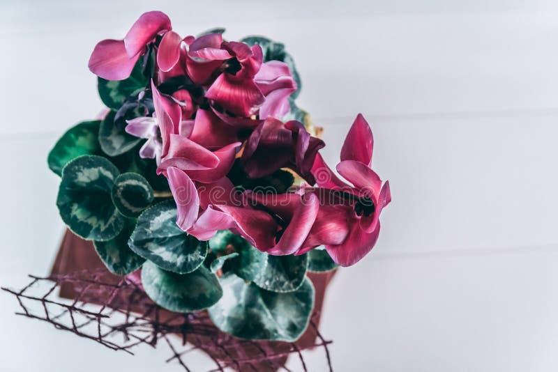 Centro de flores con las flores púrpuras imagen de archivo libre de regalías