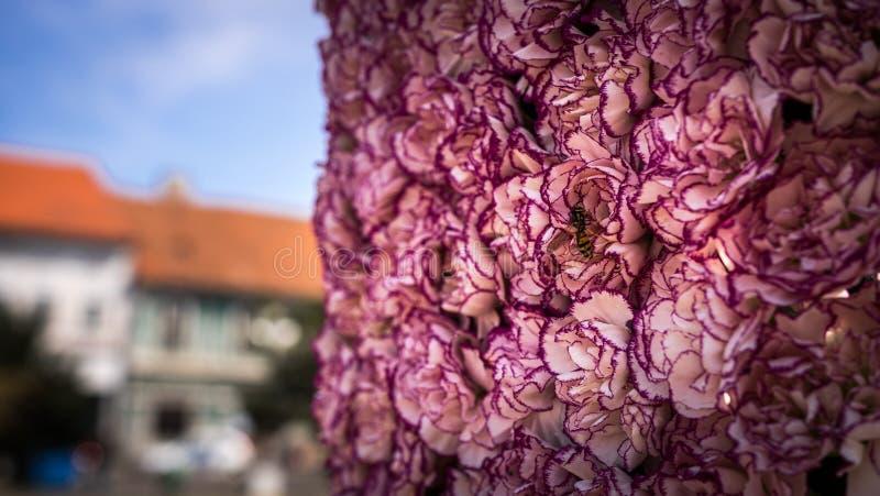 Centro de flores con rosa verde y púrpura coloridos imagen de archivo libre de regalías
