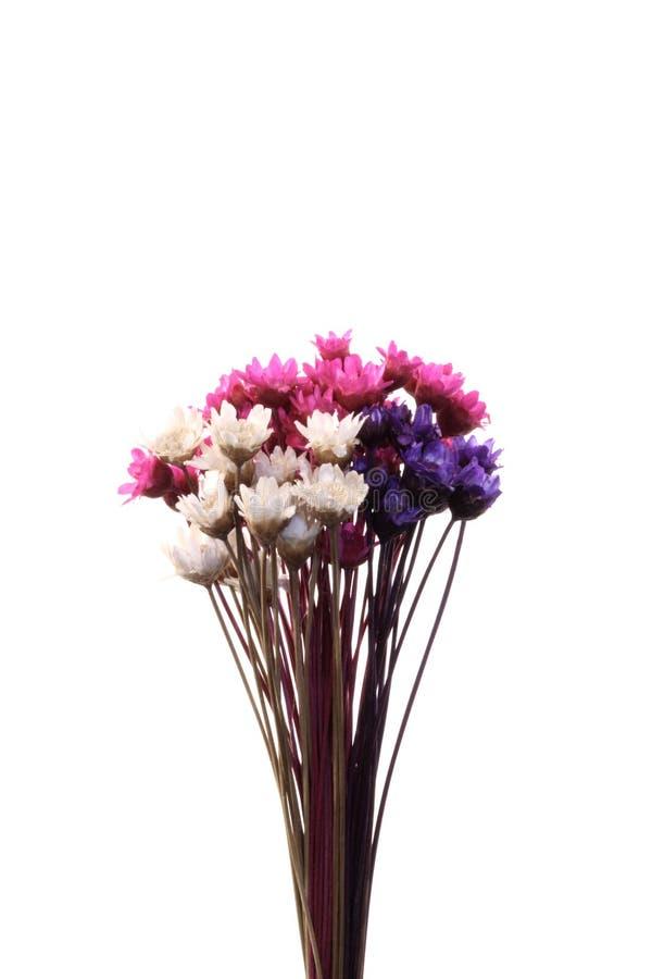 Centro de flores micro de la mezcla imagenes de archivo