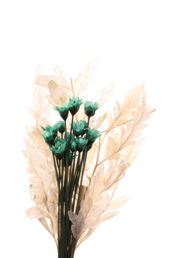 Centro de flores micro verde imagenes de archivo