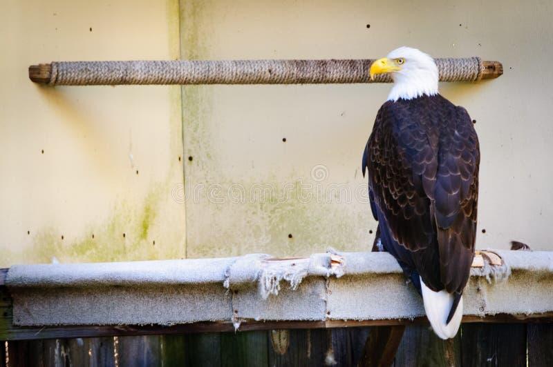Centro de Jamestown Audubon e santuário Eagle imagens de stock royalty free