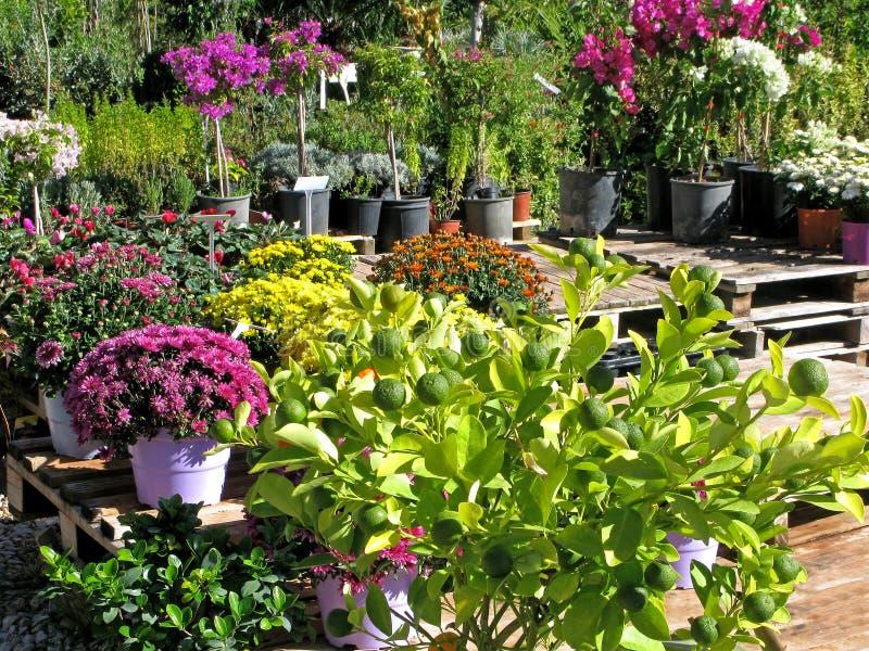 Centro de jardinería imágenes de archivo libres de regalías