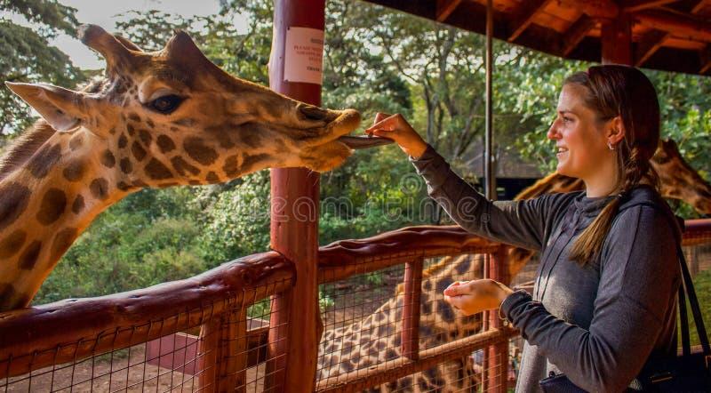 Centro della giraffa immagini stock libere da diritti