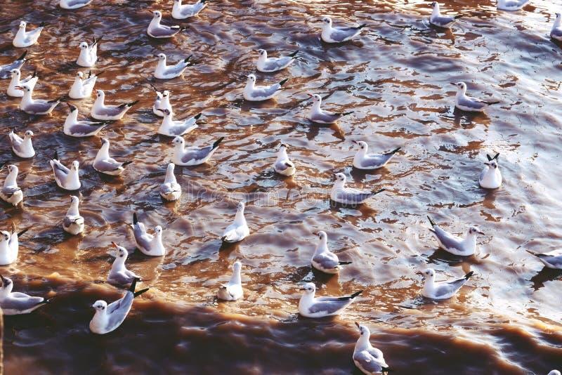 Centro recreativo do plutônio do golpe, Samut Prakarn, Tailândia, gaivotas na praia fotos de stock