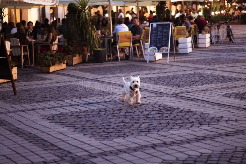 Centro storico di Sibiu, Romania immagine stock