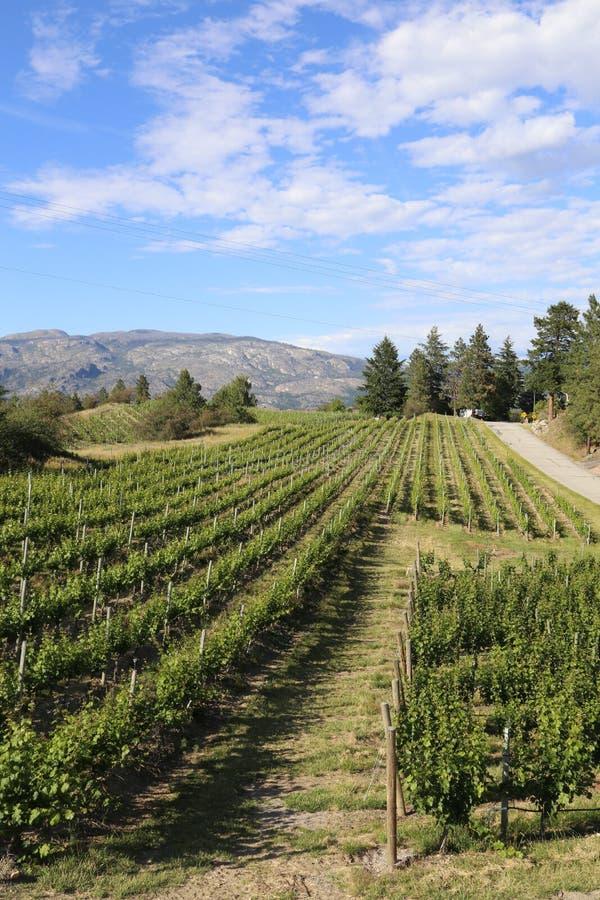 Centro-viñedo del vino imagen de archivo libre de regalías