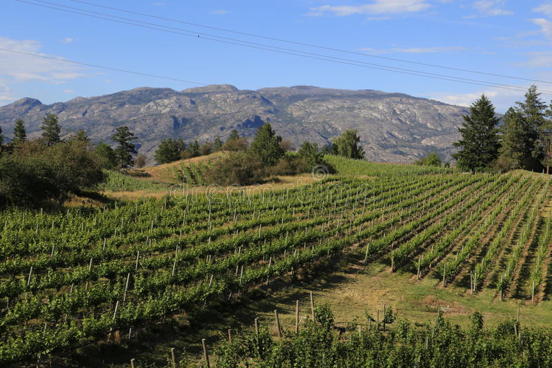 Centro-viñedo del vino imagenes de archivo