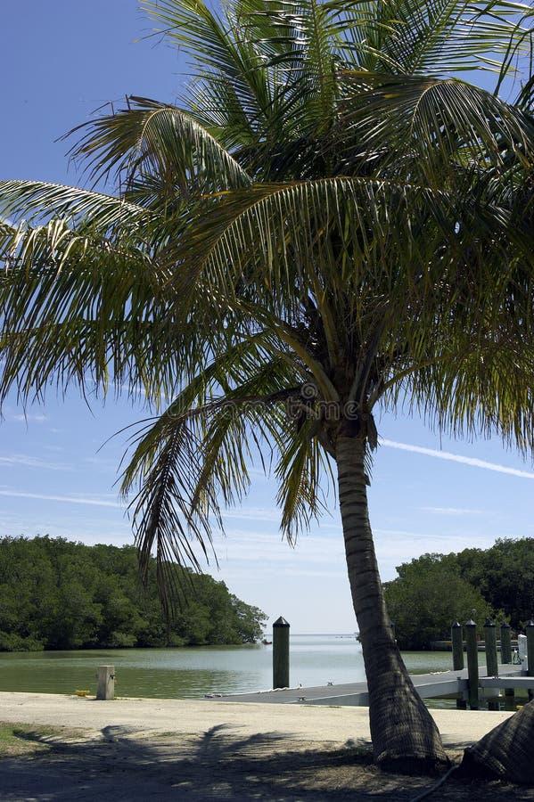 centrum bay błota flamingo Florydy parku narodowego stanu usa dokona przeglądu gościa zdjęcie stock