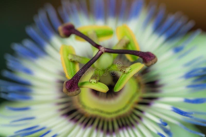 Centrum van een knop van tropische bloem royalty-vrije stock afbeelding