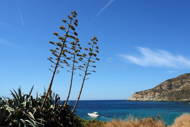 Centuri Küste in der Korsika-Insel stockfotografie