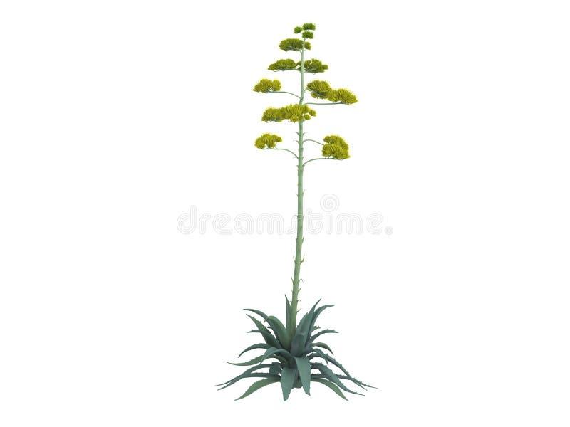 Century_plant_ (Agave_americana) ilustração royalty free
