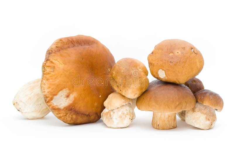 Cep royalty free stock images