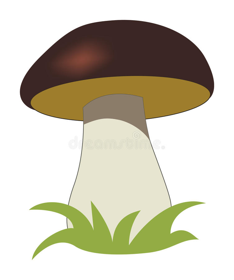 Cep. Isolated on a white background. Vector illustration royalty free illustration