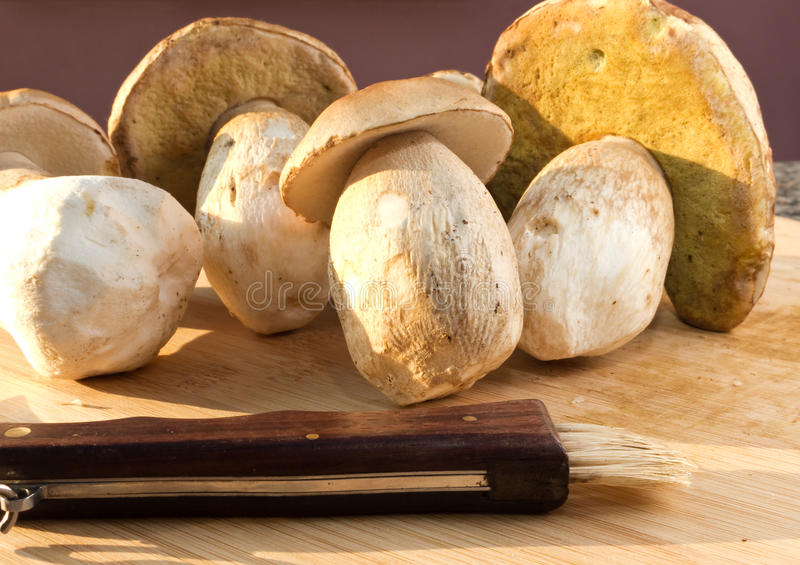 Cep mushrooms and knife royalty free stock photography