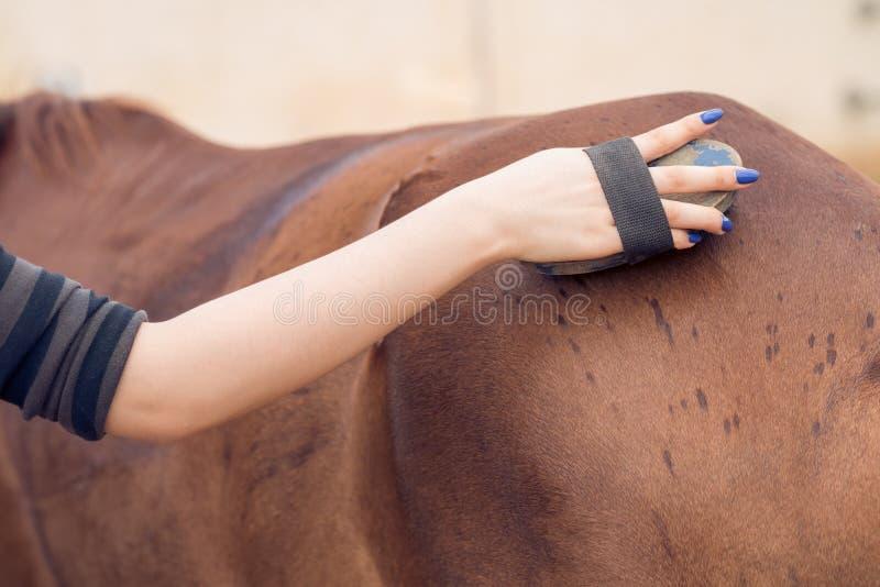 Cepillado de un caballo fotografía de archivo