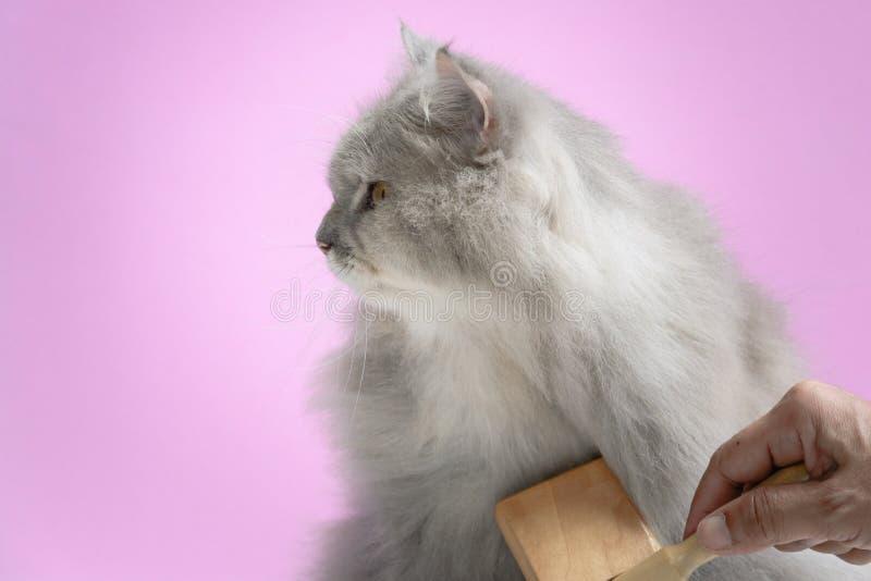Cepille el peine de la piel del gato en una tabla de madera foto de archivo libre de regalías