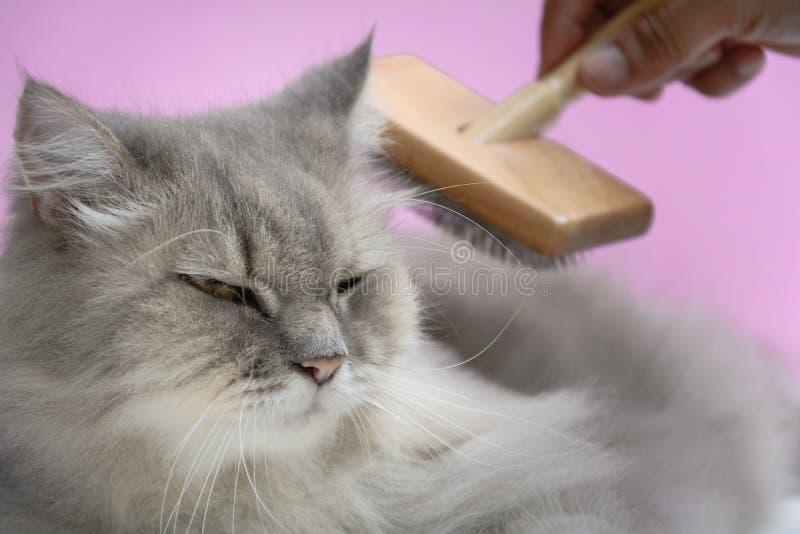 Cepille el peine de la piel del gato en una tabla de madera foto de archivo