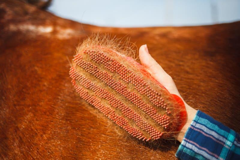 Cepille en la mano de la muchacha para peinar un pelo de la pila o del caballo con crin Día asoleado imagenes de archivo