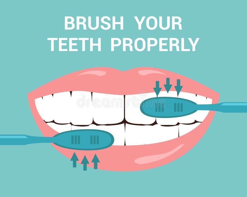 Cepille su ejemplo plano del vector de los dientes correctamente ilustración del vector