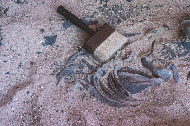 Cepille y deshuese en arena del sitio arqueológico de la excavación imagen de archivo libre de regalías
