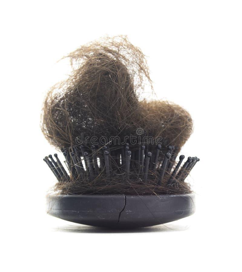 Cepillo de pelo melenudo aislado fotos de archivo libres de regalías