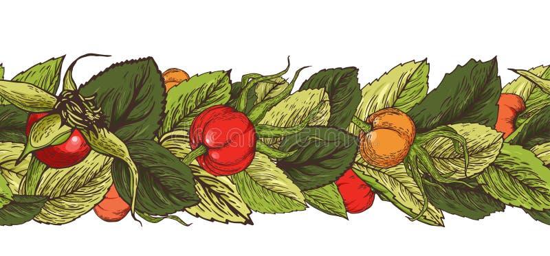 Cepillo incons?til gr?fico exhausto de la mano con las bayas y las hojas del escaramujo stock de ilustración