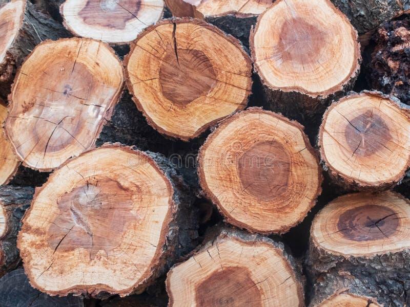 Ceppi accatastati del pino Pile di legno tagliato immagini stock libere da diritti