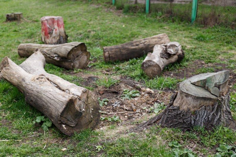 Ceppi da un vecchio albero Tagli un vecchio albero sulla terra disboscamento immagine stock