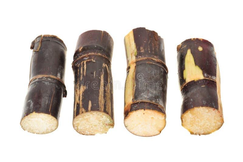 Ceppi della canna da zucchero fotografia stock