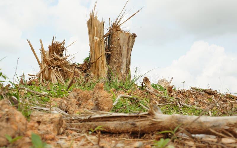 Ceppi di albero della scheggia dopo disboscamento fotografia stock libera da diritti