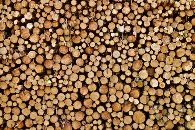 Ceppi di legno accatastati fotografia stock libera da diritti