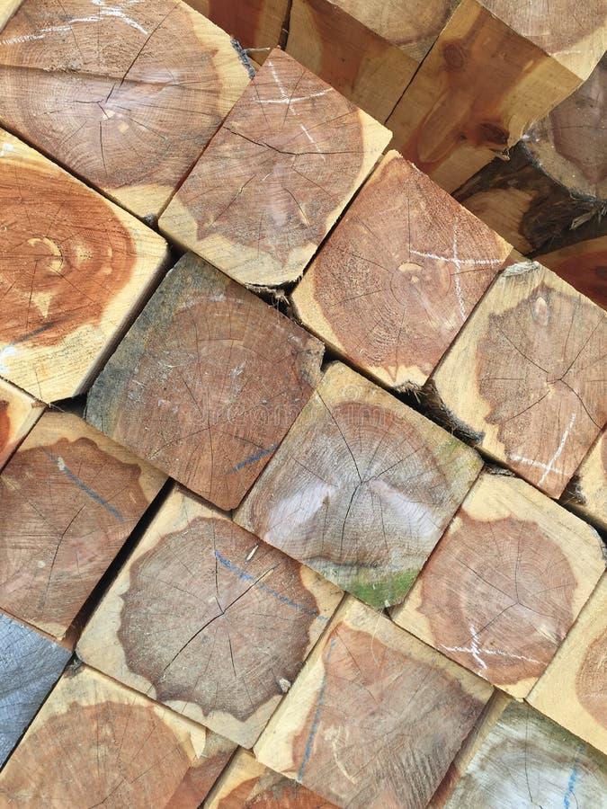 Ceppi di legno del cedro fotografia stock