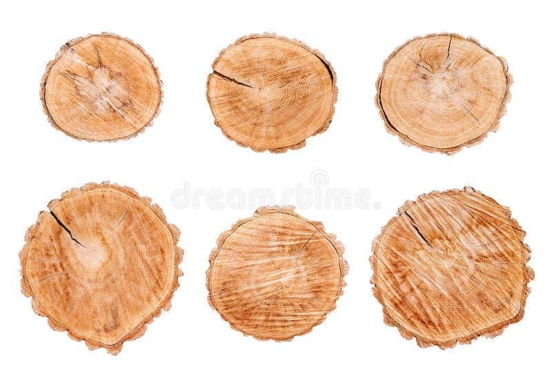 Ceppi di legno messi isolati su fondo bianco immagine stock libera da diritti