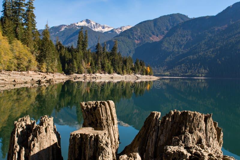 Ceppi e ceppi di albero asciutti sulla riva asciutta del panettiere Lake in cascate del nord immagini stock libere da diritti
