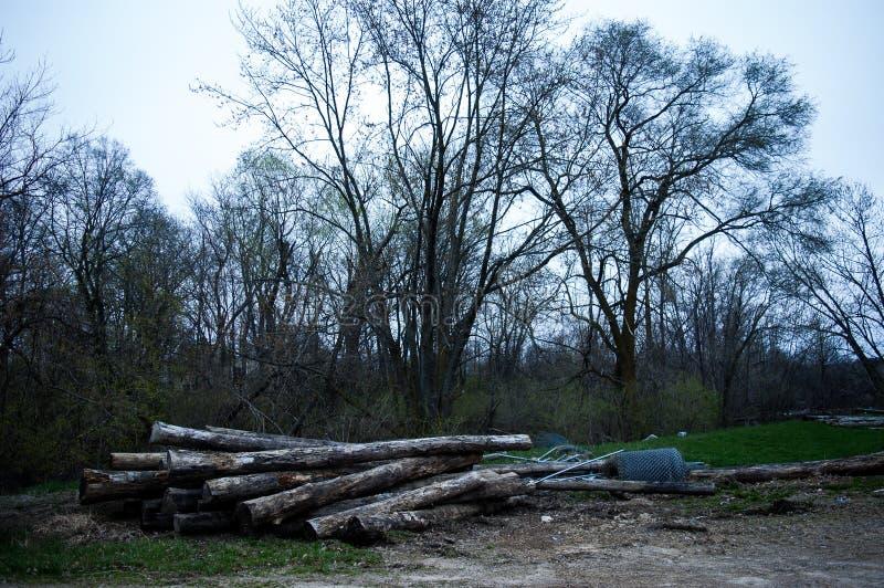 Ceppi ubriaco fradici e rifiuti di costruzione con fondo degli alberi immagine stock libera da diritti