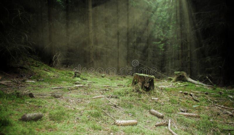 Ceppo della foresta in più forrest scuro immagine stock libera da diritti