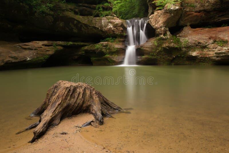 Ceppo di albero alle cadute superiori alla caverna dell'uomo anziano, parco di stato delle colline di Hocking, Ohio fotografia stock