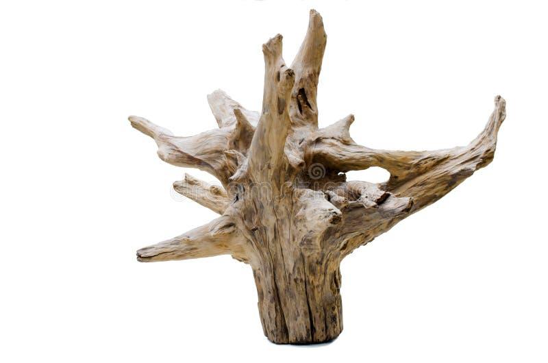 Ceppo di albero del legname galleggiante fotografia stock libera da diritti
