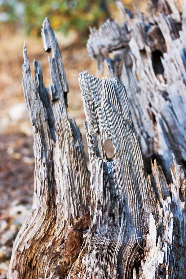 Ceppo di albero di decomposizione fotografia stock