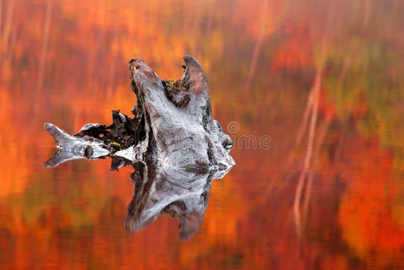 Ceppo di albero parzialmente sommerso in un Loch fotografie stock libere da diritti