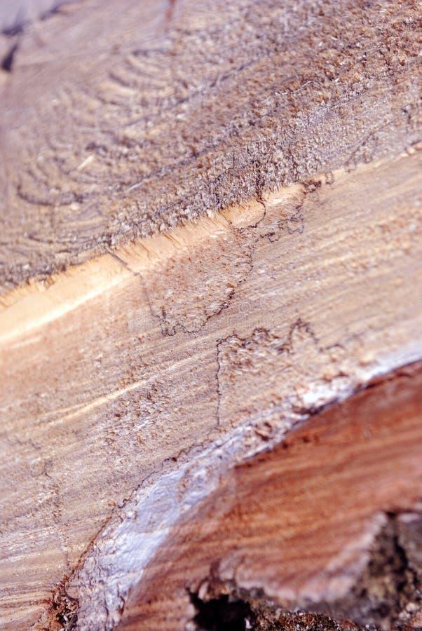 Ceppo di albero segato, fondo organico naturale, fine su immagini stock