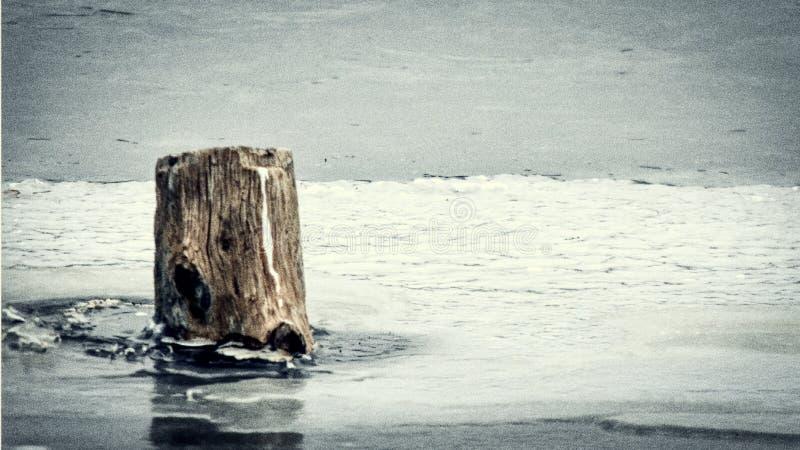 Ceppo di albero, sguardo invecchiato, sporgente da uno stagno congelato immagine stock libera da diritti