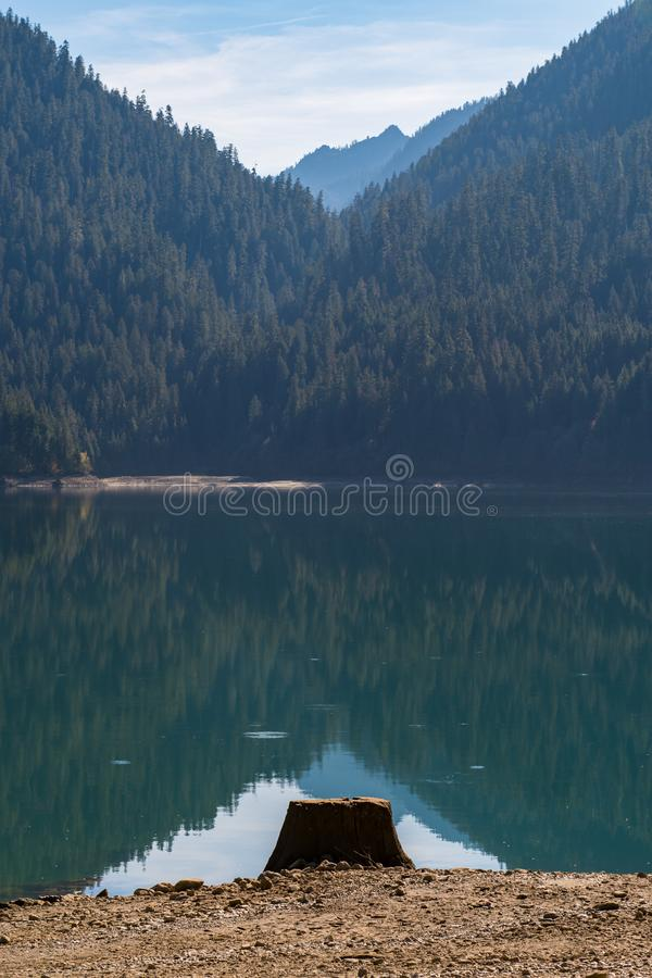Ceppo di albero sulla riva asciutta del panettiere Lake in cascate del nord fotografia stock