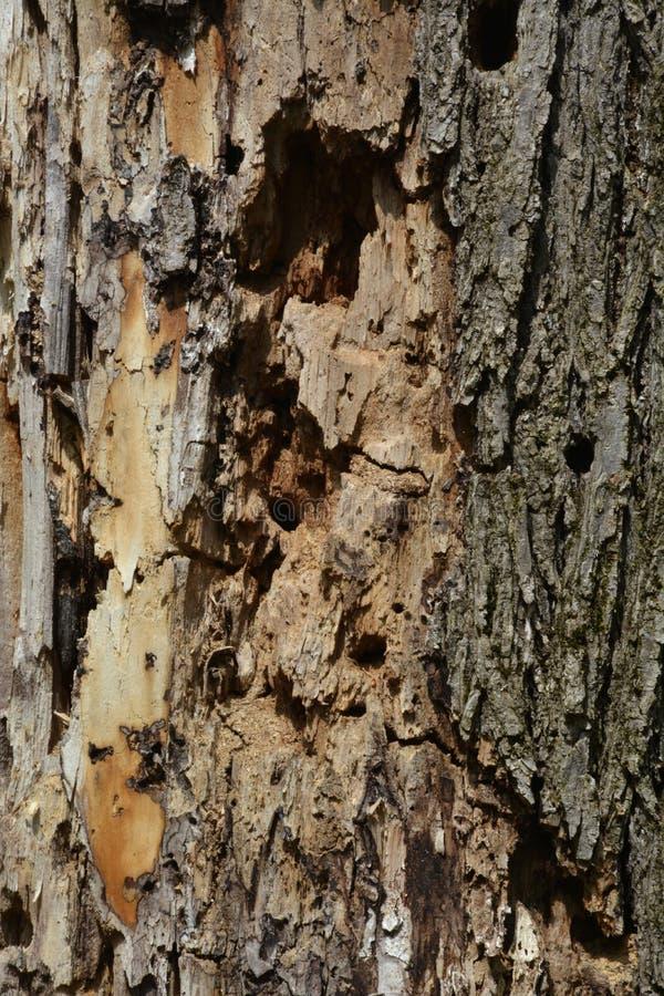 Ceppo di decomposizione nella foresta fotografia stock libera da diritti