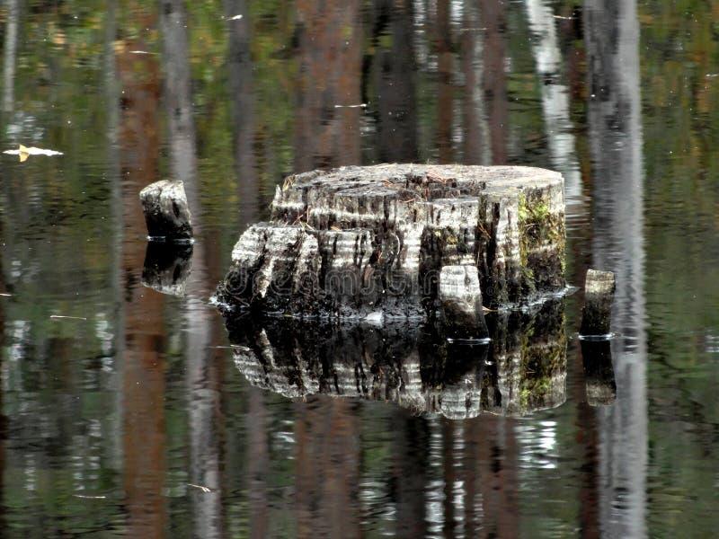 Ceppo pittoresco nel lago fotografia stock