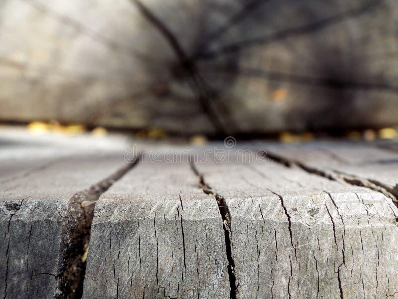 Ceppo & plancia di legno fotografia stock libera da diritti