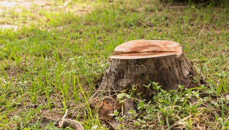 Ceppo su erba verde nel giardino Vecchio ceppo di albero fotografia stock