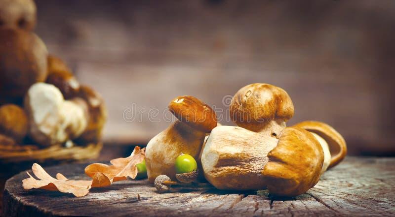 Ceps mushroom. Boletus closeup royalty free stock photo